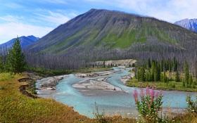 Картинка небо, деревья, цветы, река, гора