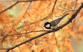 Картинка осень, листья, птица, ветка, стебель, боке