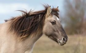 Обои профиль, морда, ветер, лошадь, конь, грива
