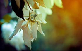 Обои весна, colours, ветка, flowers, spring, макро, цветы