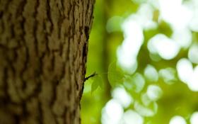 Обои листья, росток, Ствол, кора, природа, боке, листики