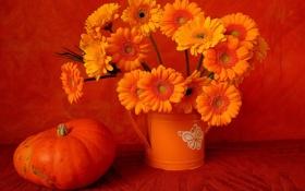 Картинка цветы, букет, тыква, натюрморт, герберы