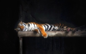 Картинка кошка, тигр, сон, шерсть