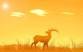 Обои животные, солнце, закат, природа, восход, олень