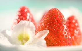 Картинка белый, цветок, цветы, еда, клубника