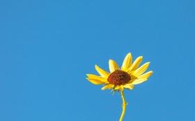 Обои цветок, небо, макро