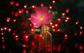 Обои цветок, свет, огни, розовый, красные, гирлянда, баночка