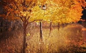 Обои осень, листья, деревья