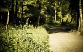 Обои дорога, лето, природа, травы