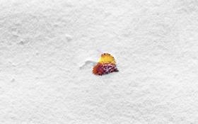 Картинка зима, макро, снег, природа, листок, nature, winter