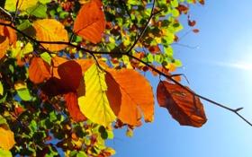 Обои осень, небо, макро, листва, ветка