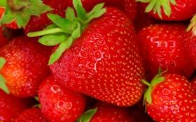 Картинка ягоды, фон, клубника, strawberry, fresh berries