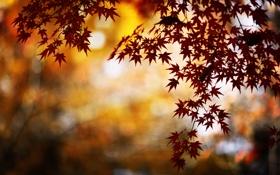 Картинка природа, листва, осень, ветка, блики