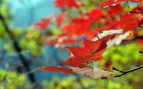 Обои осень, лес, листья, деревья, природа, парк, листопад