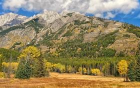 Обои осень, лес, небо, облака, деревья, горы, канада