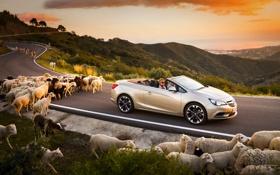 Обои Дорога, Машина, Кабриолет, Опель, Овцы, Opel, Cascada