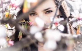 Картинка Девушка, глаза, ветви, дерево, взгляд, цветы