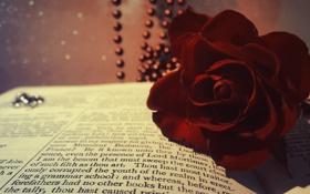 Обои цветок, макро, роза, бусы, книга, красная, бордовая
