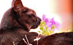 Обои кот, кошак, котяра, цветочек, принюхивается
