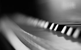 Картинка макро, клавиши, черно-белое, пианино