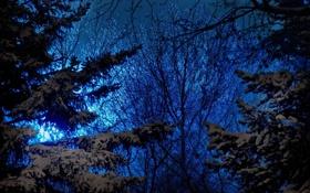 Обои зима, небо, снег, деревья, природа, вечер, ели
