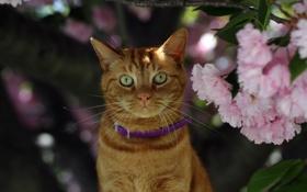 Картинка кошка, взгляд, цветы