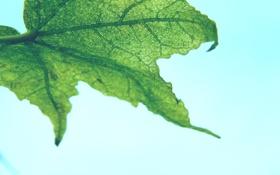 Картинка листья, макро, фон, обои, картинки