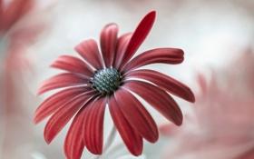 Картинка цветок, природа, краски, лепестки