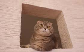 Обои глаза, кот, розовый, окно, британец