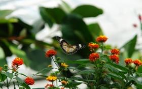 Обои контраст, ветки, клумба, бабочка, зелень, узор, листья