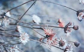 Картинка ветки, лепестки, сухие цветы