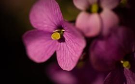 Обои макро, цветы, природа, фото, красивые обои