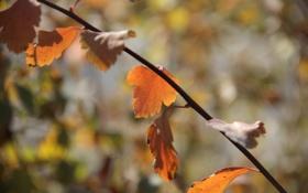 Картинка осень, листья, солнце, ветки, красный листок