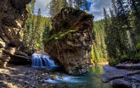 Картинка лес, деревья, природа, река, скалы