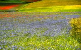 Картинка поле, трава, цветы, холмы, луг