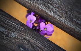 Картинка Flower, macro, Bench