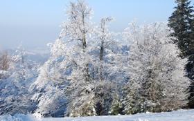 Картинка зима, иней, лес, снег, природа, дерево, ель