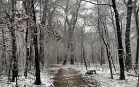 Картинка зима, природа, парк