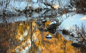 Обои природа, камни, золото, речка