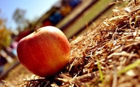 Картинка макро, красное, трава, яблоко, солнце