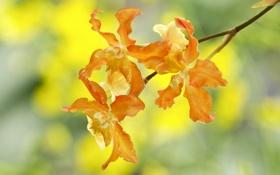 Картинка природа, лепестки, ветка, цветы