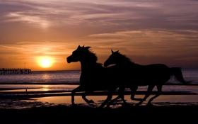Обои море, закат, кони