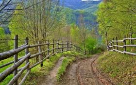 Обои забор, дорога, лето