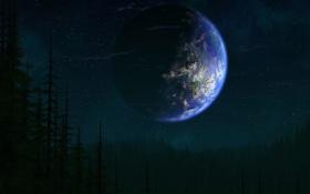 Обои лес, планета, щиито