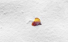 Обои зима, снег, лепесток