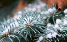 Обои макро, снег, иголки, ветка, зелёный, хвоя