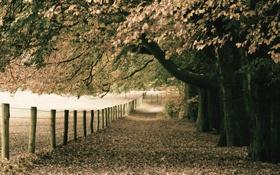 Картинка природа, осень, парк, листва, монотонность