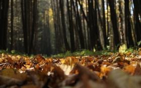 Картинка осень, листья, деревья, природа