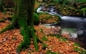 Обои листья, мох, осень, деревья, ручей, лес, камни