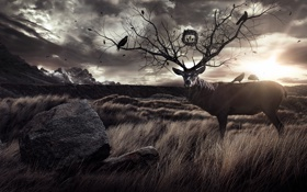 Обои трава, пейзаж, птицы, камень, олень, рога, ветвь